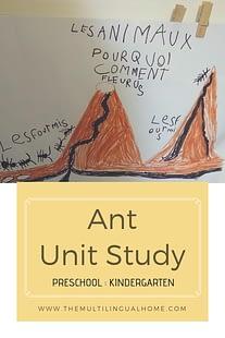 Ant Unit Study